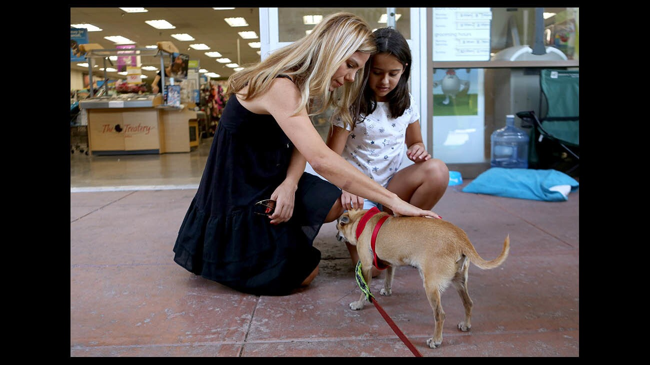 Photo Gallery: Pet adoption day at PETCO