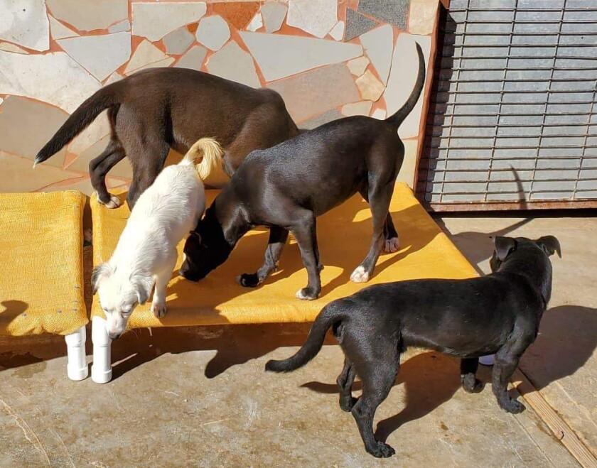 6 - Dog beds arrive at BAS.JPG
