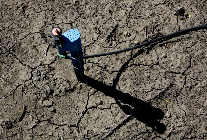In this photo taken Friday March 27, 2015, low-flow water emitter sits on some of the dry, cracked ground of farmer Rudy Mussi's  almond orchard in the Sacramento-San Joaquin Delta near Stockton, Calif.  As California enters the fourth year of drought, huge amounts of water are mysteriously vanishi