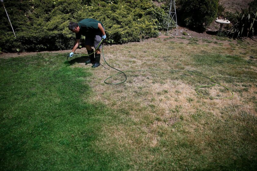 Brown Lawns Green owner Bill Schaffer applies green paint to a lawn on May 29 in Novato, Calif. As the severe California drought continues to worsen, homeowners and businesses looking to conserve water are letting lawns go dormant and some are having them painted to look green.