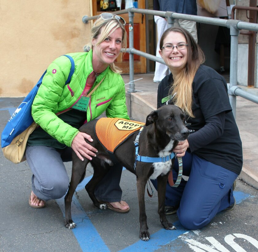 Jaime Murky of Rancho Coastal Humane Society (left) and a male Greyhound-Labrador mix, Brooks (who is up for adoption), with Heather Clark of La Jolla Veterinary Hospital.