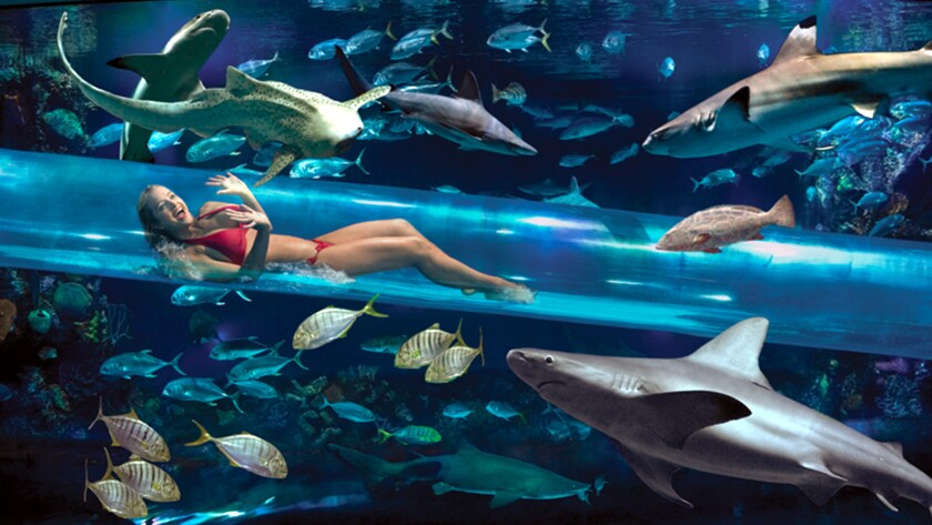 Swim with sharks (sort of) in the Shark Chute, an acrylic tube in the Golden Nugget's three-level pool that takes you close to five kinds of sharks.