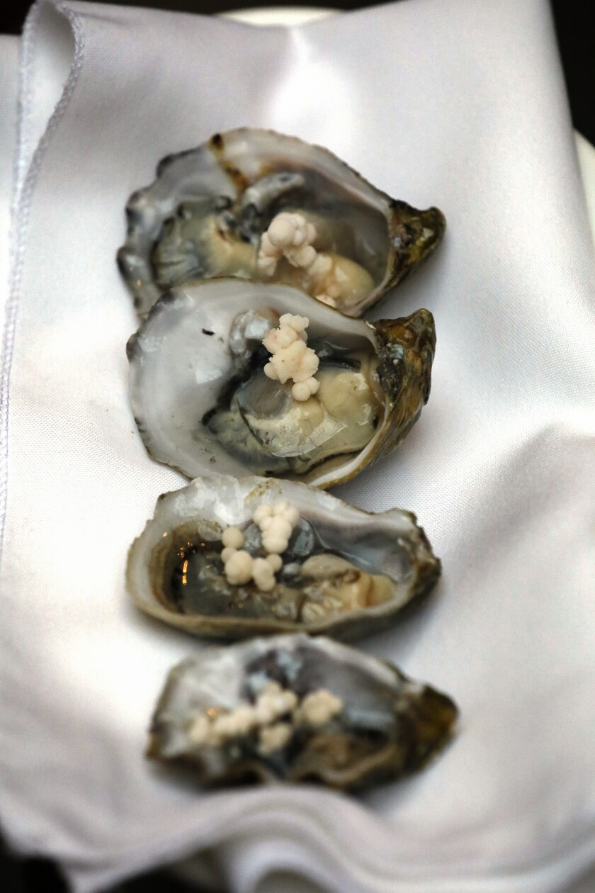 A photo of several Kumamoto oysters at Cosecha SD