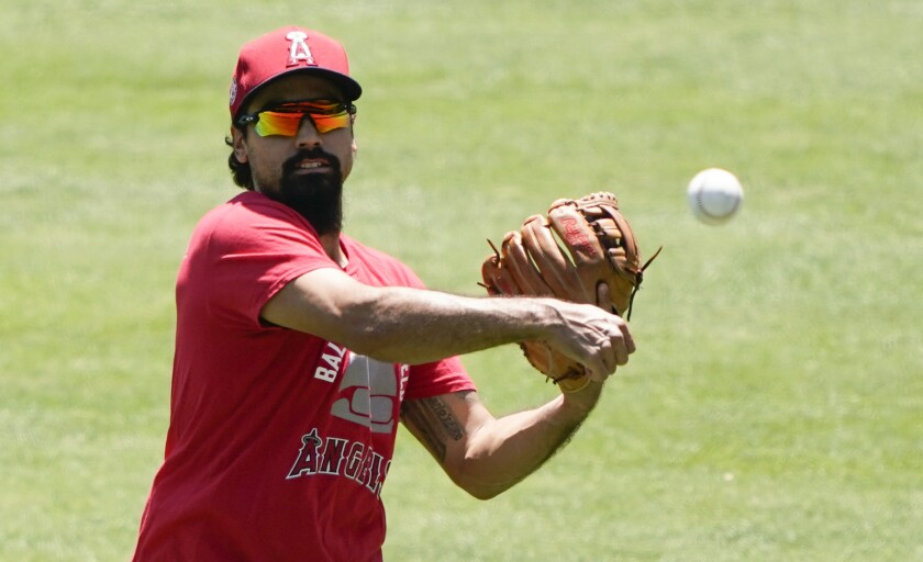 Angels third baseman Anthony Rendon throws during practice.