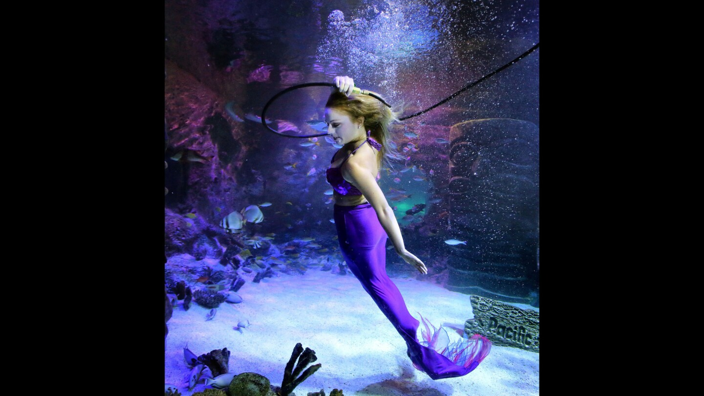 Weeki Wachee's mermaids guest star at Sea Life Orlando Aquarium