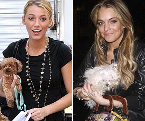 lat-intro-rewind-celebrity-dogs