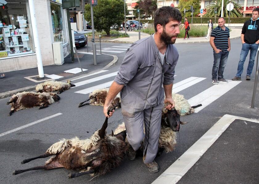 France Bear Ban