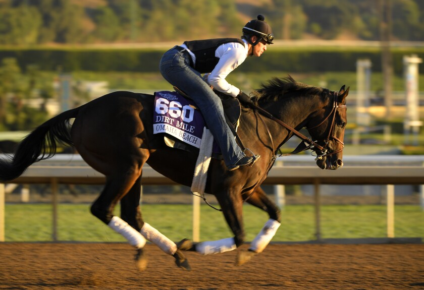 An ankle injury will prevent Omaha Beach from racing Saturday at Gulfstream Park in Florida.
