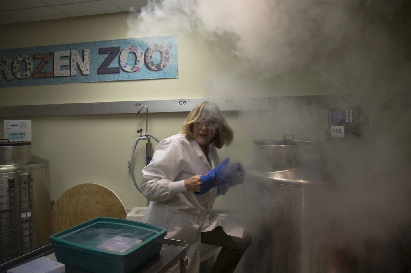 Dr. Barbara Durant, director of reproductive physiology, removes frozen embryos and eggs from a tank filled with liquid nitrogen which preserves the gene pool of some endangered species at the Frozen Zoo at the San Diego Zoo Conservation Research Institute.