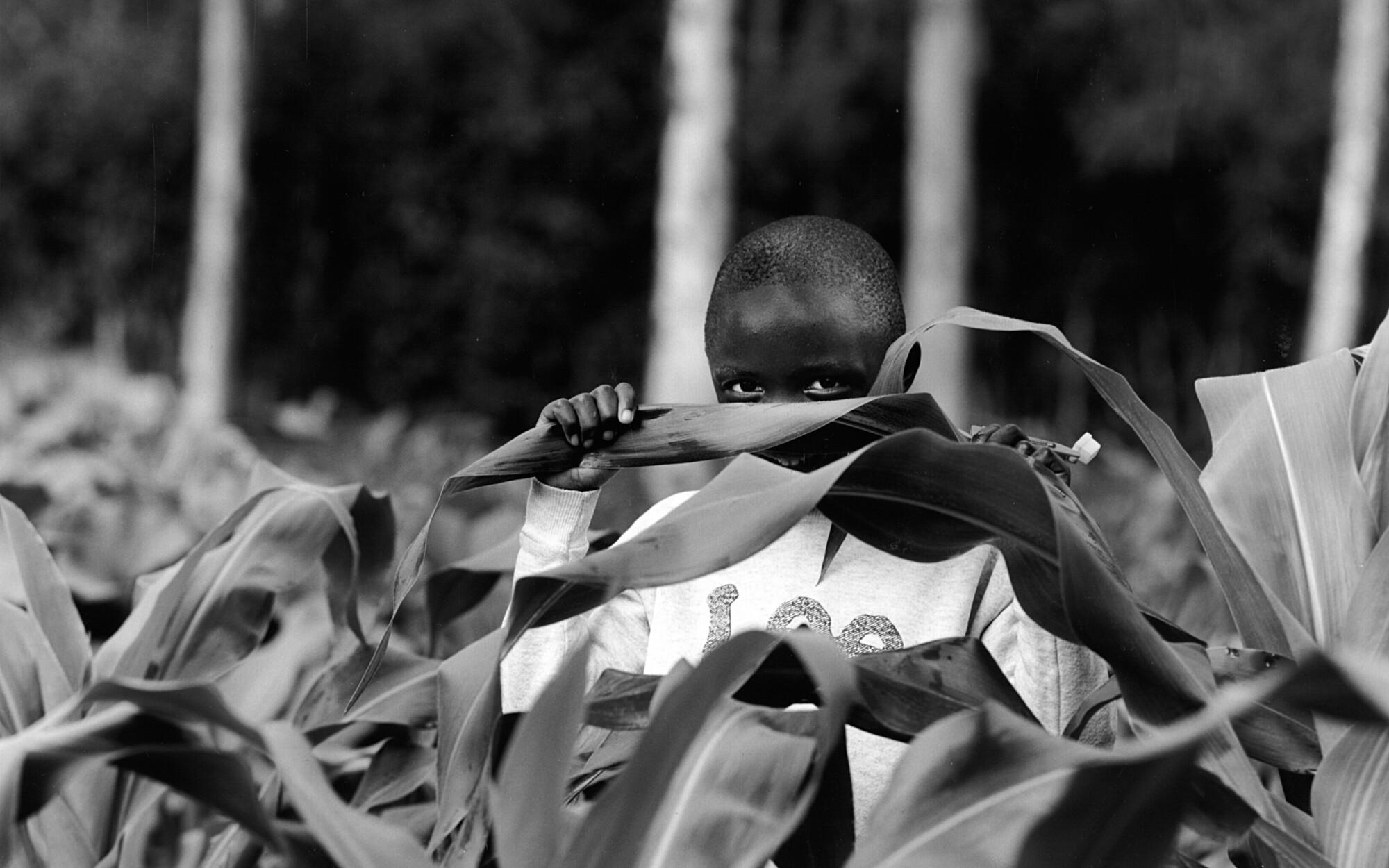 """""""Boy in Nyumbani Cornfield,"""" by Art Myers"""