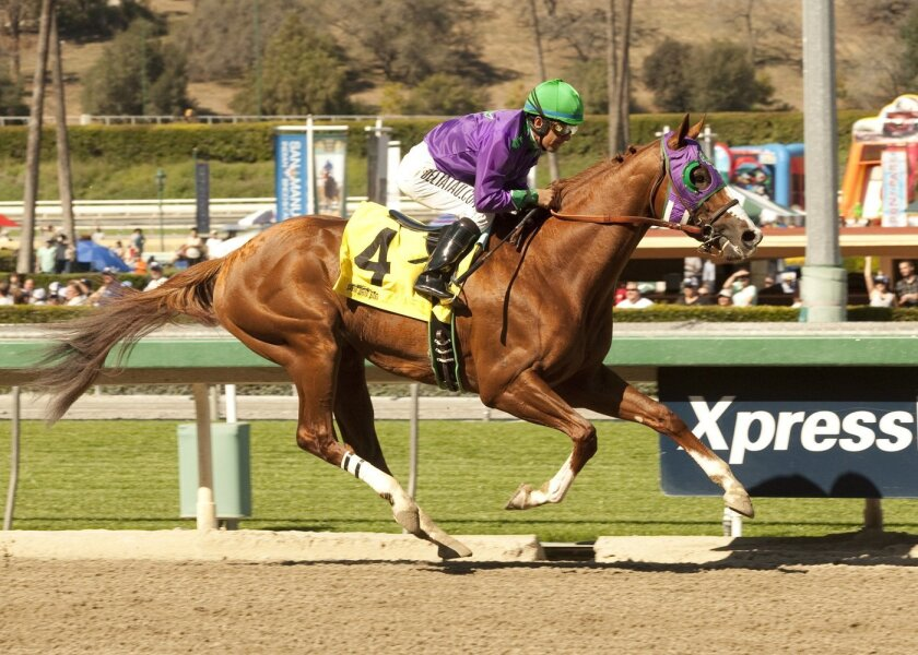 In this image provided by Benoit Photo, California Chrome, ridden by Victor Espinoza, leads wire-to-wire to win the San Felipe Stakes horse race Saturday, March 8, 2014 at Santa Anita Park in Arcadia, Calif. (AP Photo/Benoit Photo) ©Benoit Photo
