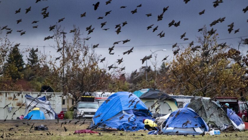 CHICO, CA - NOVEMBER 29, 2018: The birds are enjoying the deluge of rain much more than the Camp fir