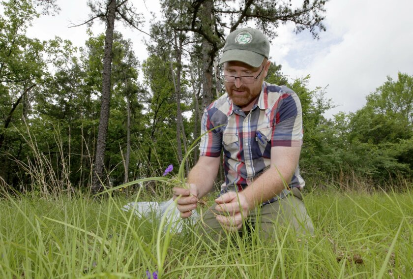 In this May 7, 2015 photo, botanist Theo Witsell examines a plant near Mount Ida, Ark. Witsell, the botanist for the Arkansas Natural Heritage Commission, and a handful of other commission staff have combed the state in recent years to find, collect and preserve more than 70,000 native plant species. (AP Photo/Danny Johnston)