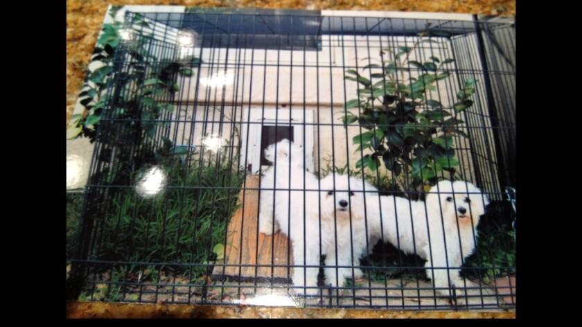 A large pet cage can help protect dogs from coyotes.