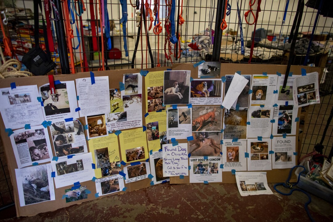 Posters of missing pets after the camp fire
