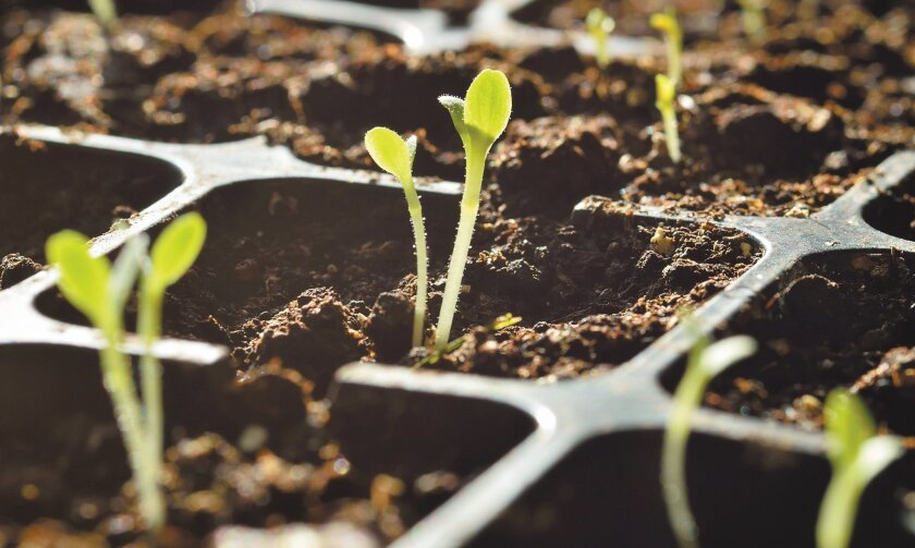 February's a good time to start growing spring veggies from seeds.