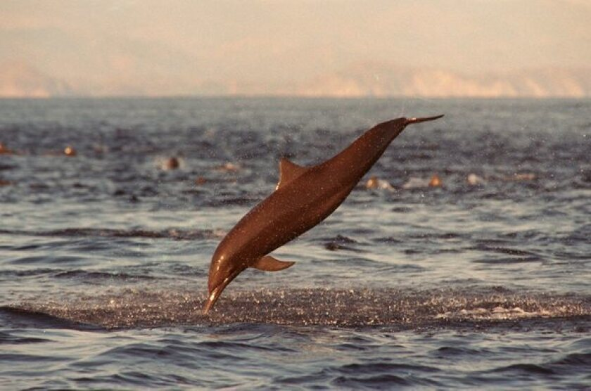 NOAA expanding dolphin-safe tuna certification requirements