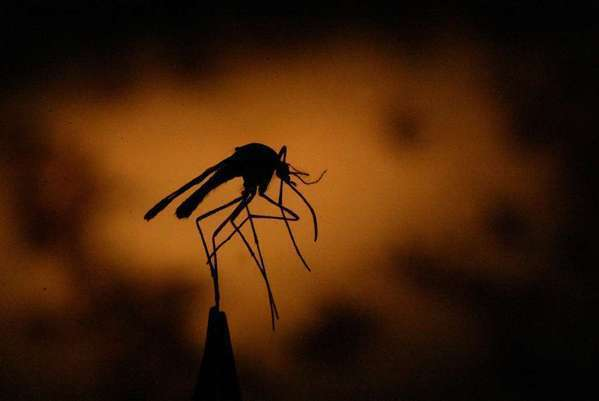 West Nile virus blamed in death of Fresno man, the second in the state this year