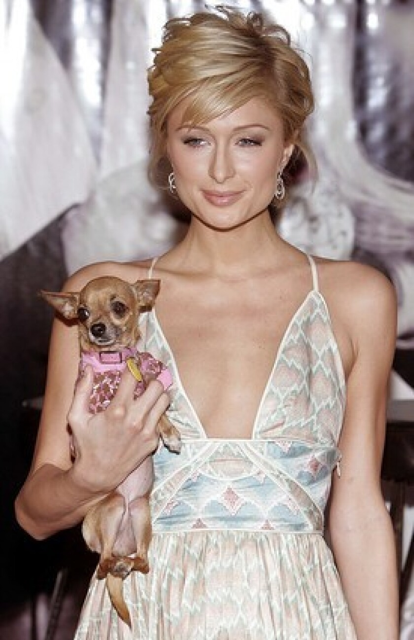 Paris Hilton, holding her chihuahua Tinkerbell in one hand