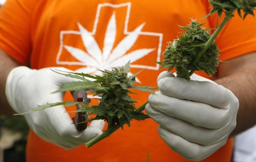 Una compañía recibe la certificación para producir cannabis medicinal en Colombia