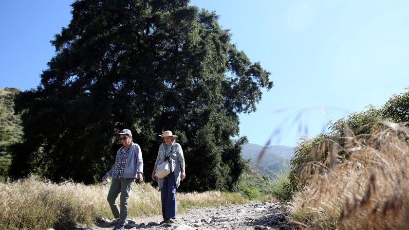 Ruth Fisher, left, and Roxanne Correa pass an oak tree along the trail at Deukmejian Wilderness Park.