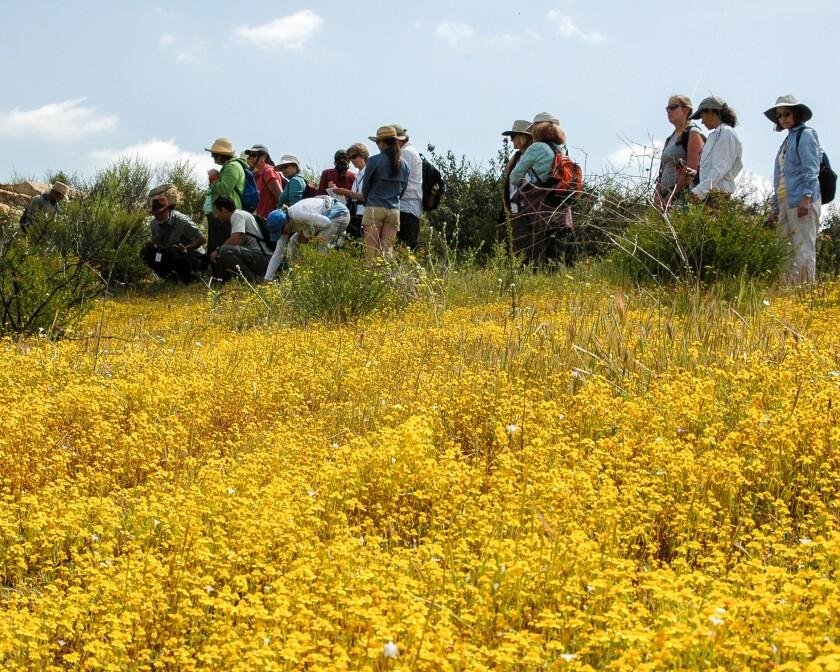 Enjoying Spring Flowers on the Piedras Pintadas Trail
