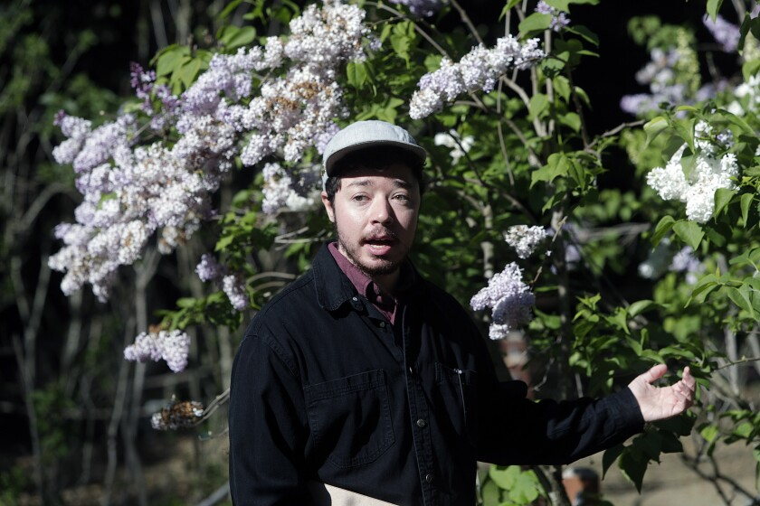 Records coordinator Roy Jenkins hosts a virtual tour video highlighting lilacs at Descanso Gardens.