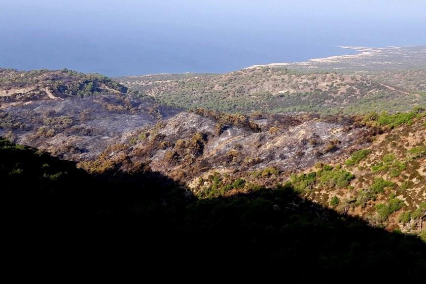 Cyprus Forest Arson