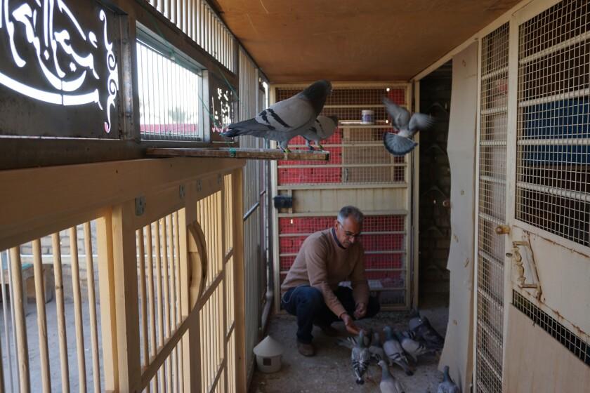 ct-iraq-pigeon-racing-sport-20190226-002