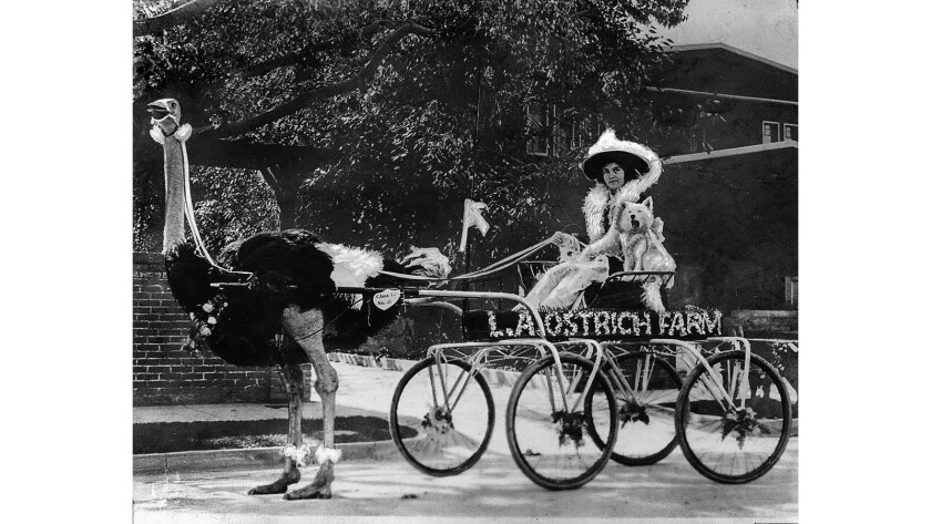 Jan. 1, 1915: An ostrich named Cloudburst pulls Virginia Moon in her L.A. Ostrich Farm entry in the Rose Parade.