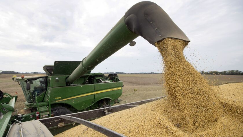 FILE - In this Friday, Sept. 21, 2018, file photo, soybeans are offloaded from a combine during the
