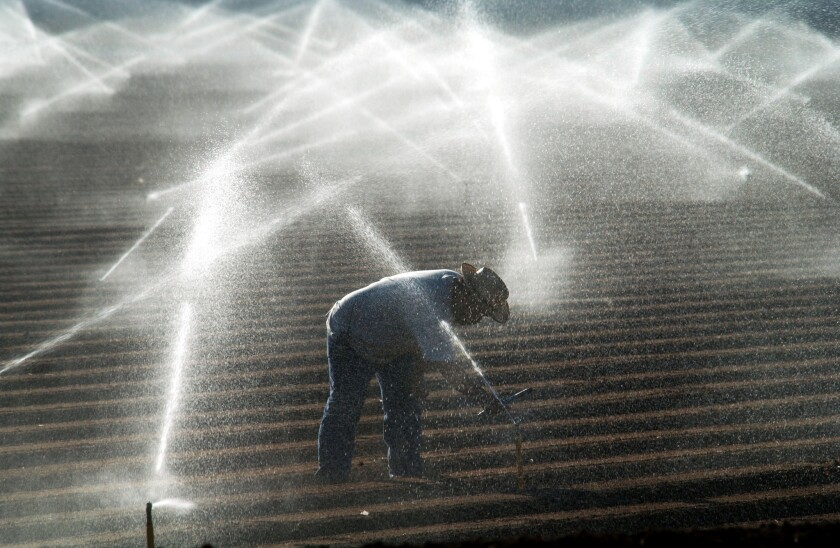Farm worker in Imperial Valley adjusts sprinklers spraying Colorado River water.