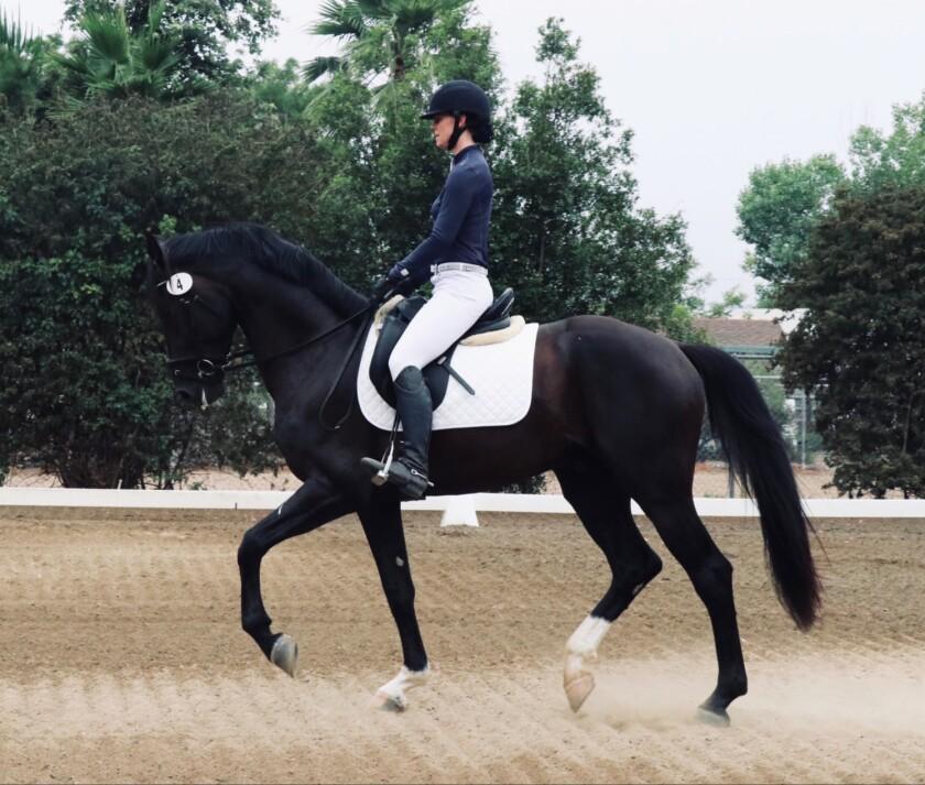 Pepper Creek's Jessie Pierce on the equine center's upcoming 4-year-old GOV stallion, Sivan.