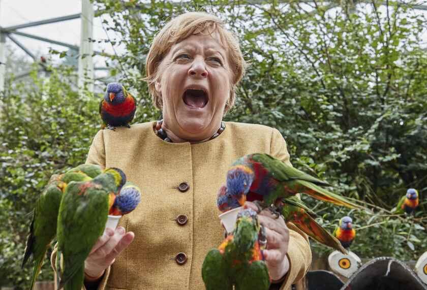 La canciller alemana Angela Merkel reacciona mientras un loro la picotea en el Aviario de Marlow