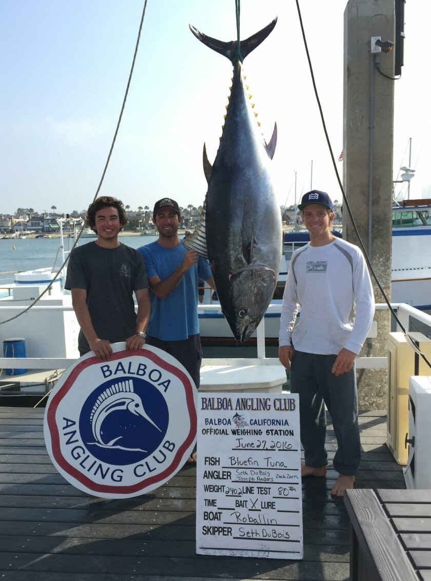 From left: Joseph Aunders, Zach Zorn and Seth DuBois show off a 240.2-pound bluefin tuna Monday at Balboa Angling Club at Newport Marina in Newport Beach. They hooked into the fish 50 miles west of San Diego and fought it for eight and a half hours, landing it after dark. Courtesy photo