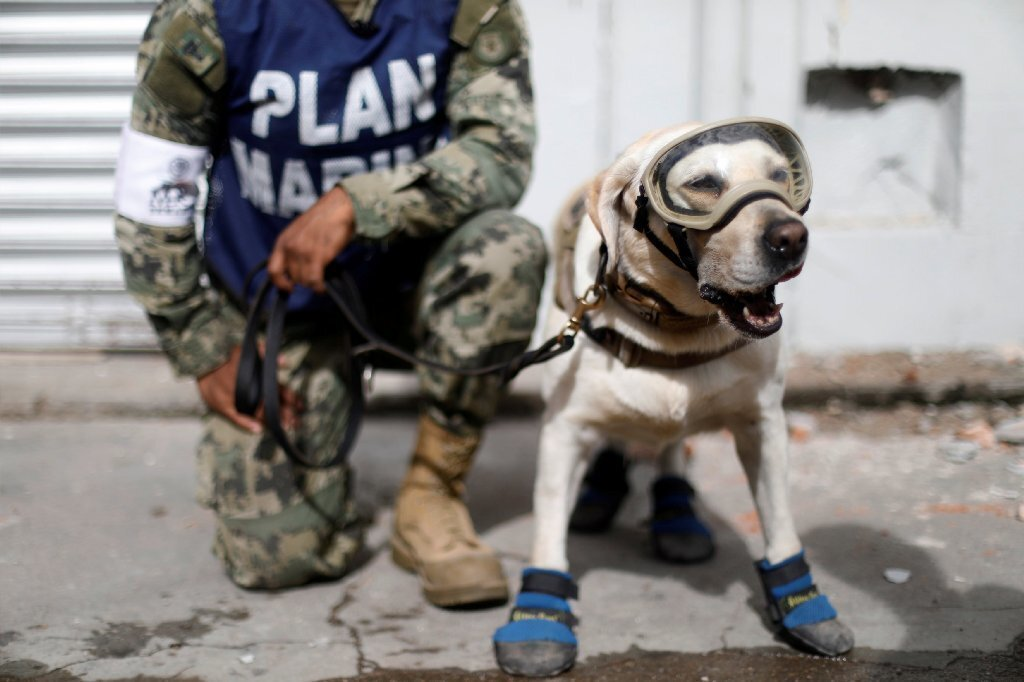 Mexican Navy dog ready to do some rescuing
