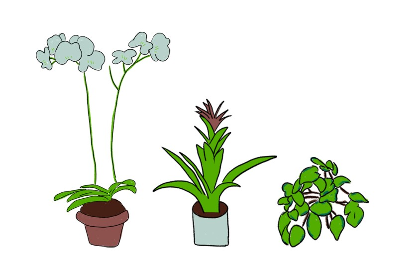 Illustration of Garden Marcus and his favorite plants