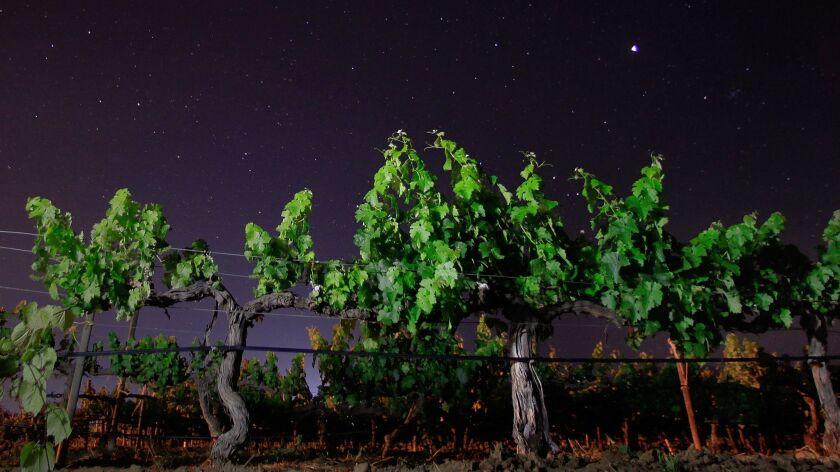 The stars shine bright over El Valle de Guadalupe's wine country.