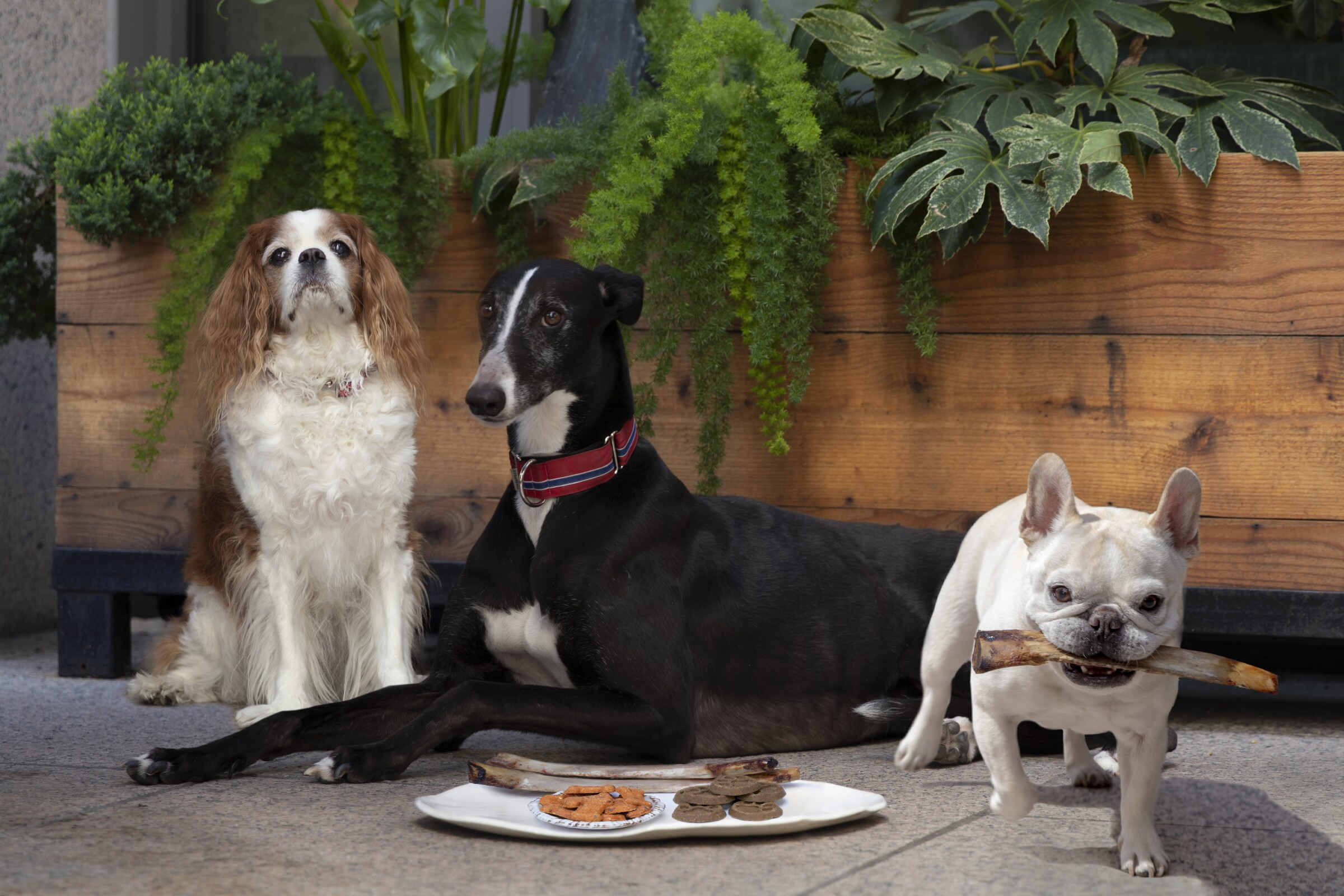 A variety of breeds enjoy food offerings on the dog menu at International Smoke, one of the eight spots to take your pup to on our pet dining list.