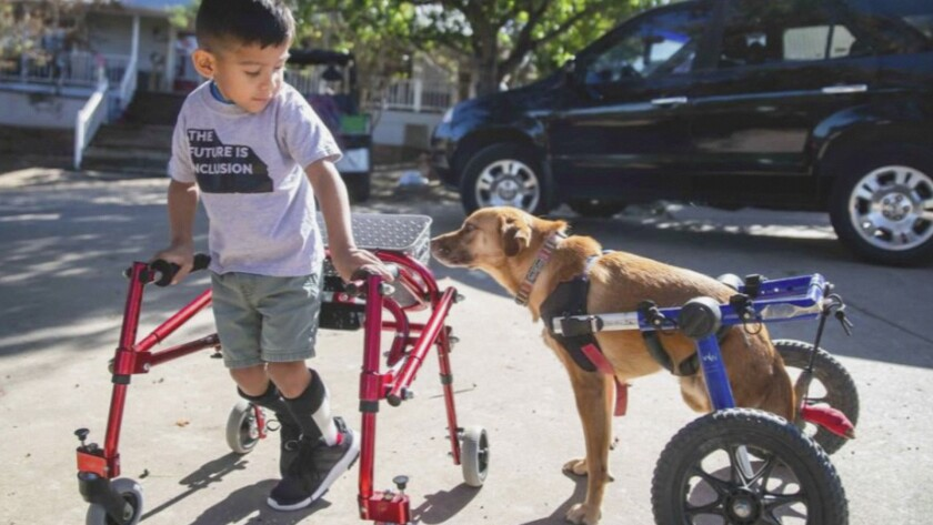 """This image released by CBS All Access shows Ace Ruelas-Jimenez, left, with dog Frances in a scene from the episode """"A Discount Service Dog"""" on the new original docuseries """"That Animal Rescue Show,"""" launching on Thursday, Oct. 29. (CBS All Access via AP)"""