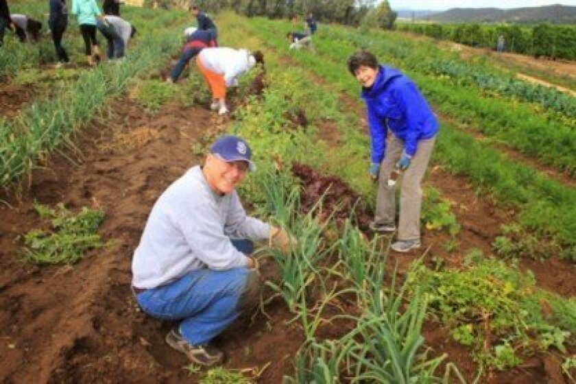 Volunteers join Rotarians in working  the fields at San Pasqual Academy.