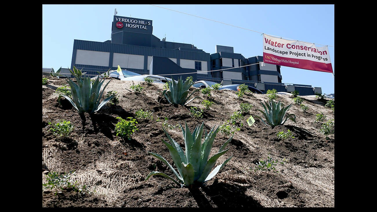 Photo Gallery: USC  Verdugo Hills Hospital water conservation landscape project