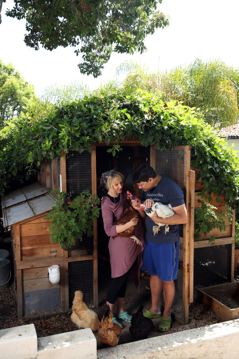 Vines help cool Trish and Roe Sie's coop in Los Feliz. The couple installed a generator and air conditioning after a heat wave in 2018.