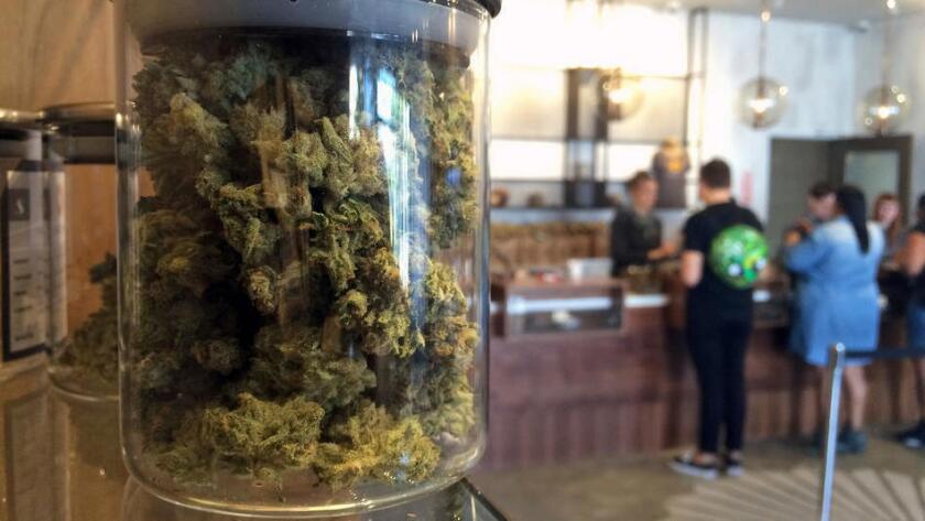 Diez puntos importantes acerca de la legalización de la marihuana en California