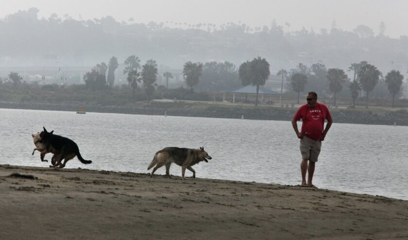 Taking advantage of the cool morning at Fiesta Island's dog park, Karl Almryde waited for his dogs Star, Zeke and Callie to catch up with him on the water's edge.