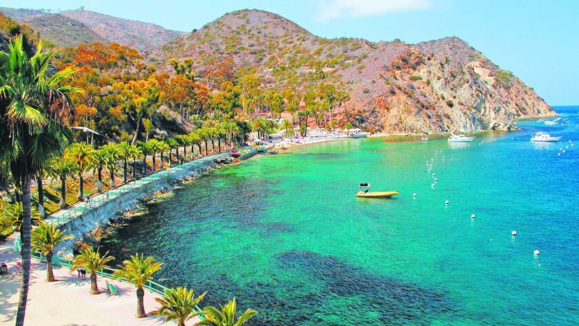 The palm-lined walkway to Descanso Beach as seen from the Casino on Catalina Island is postcard-pret