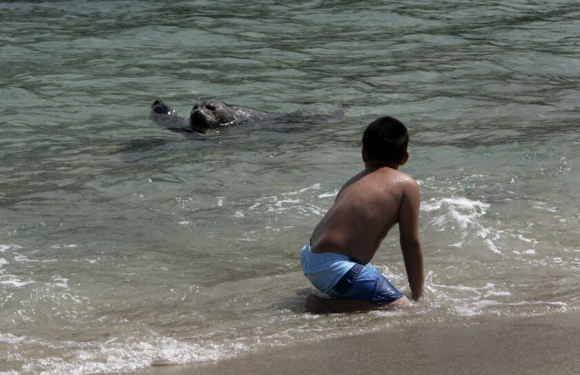 Seals and people have co-existed uneasily at the Children's Pool beach in La Jolla for years.