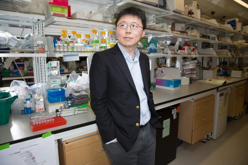 Feng Zhang, a bioengineer at MIT and the Broad Institute, has extended his gene-editing work on DNA to RNA.