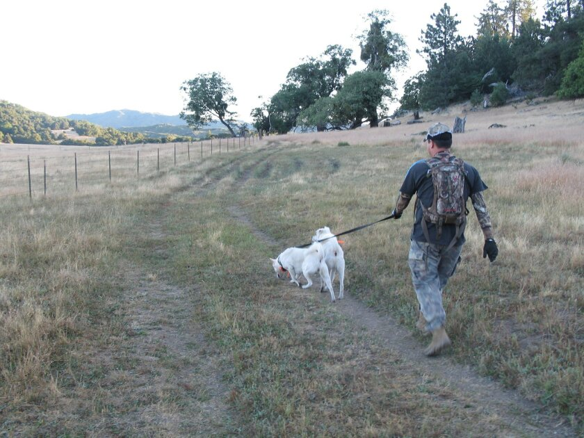 Gen Murofushi and his two dogs, Taro and Yuki, hunt the San Diego County backcountry for wild pigs on a recent hunt.