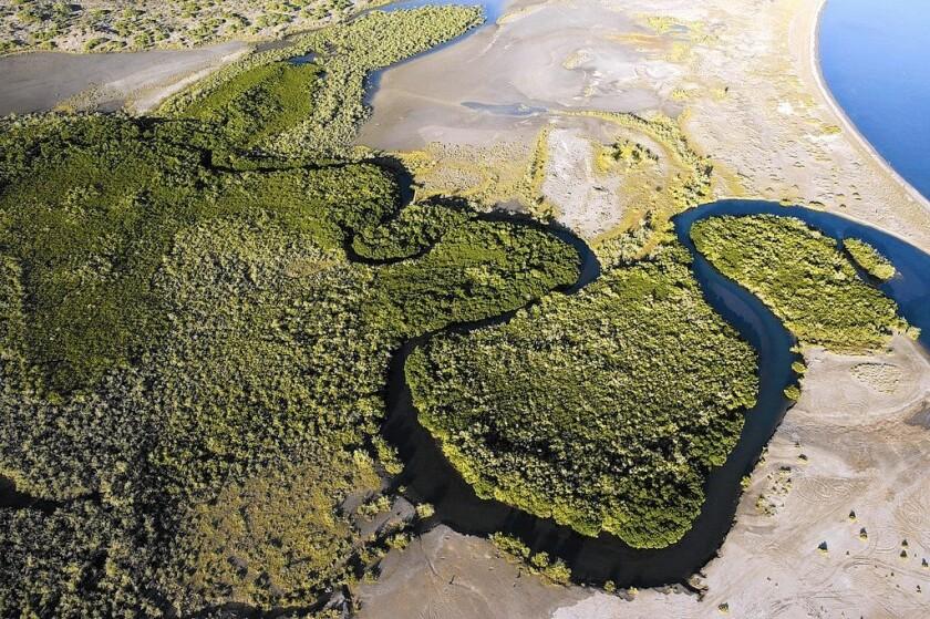 Mangroves help mitigate climate change